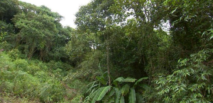 Prazo para se registrar no Cadastro Ambiental Rural está acabando
