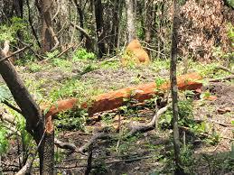 Dá para conciliar o agronegócio e a conservação da Amazônia?